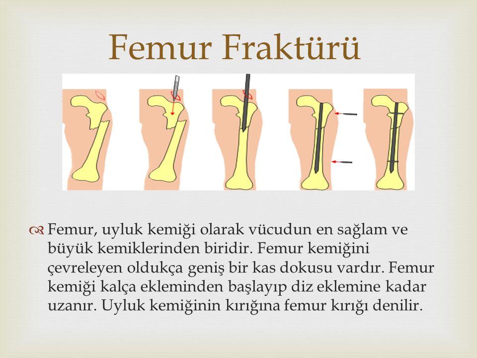   Femur, uyluk kemiği olarak vücudun en sağlam ve büyük kemiklerinden biridir. Femur kemiğini çevreleyen oldukça geniş bir kas dokusu vardır. Femur