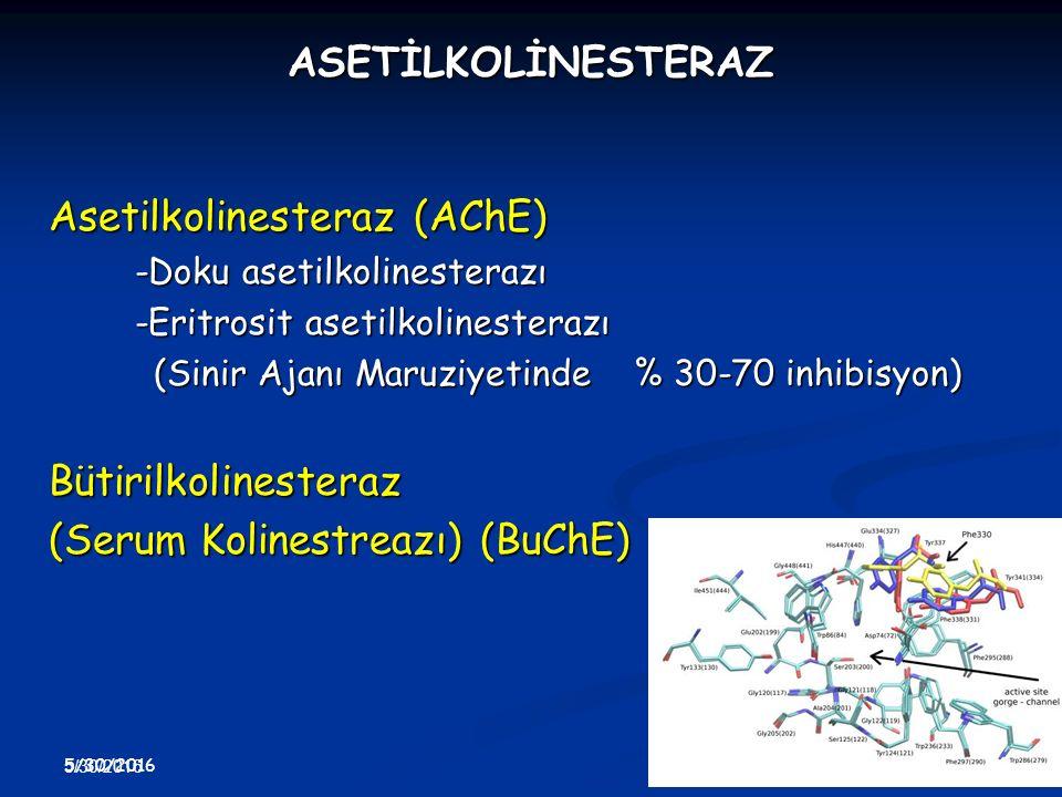 5/30/2016 41 5/30/2016 41 ASETİLKOLİNESTERAZ Asetilkolinesteraz (AChE) -Doku asetilkolinesterazı -Eritrosit asetilkolinesterazı (Sinir Ajanı Maruziyet