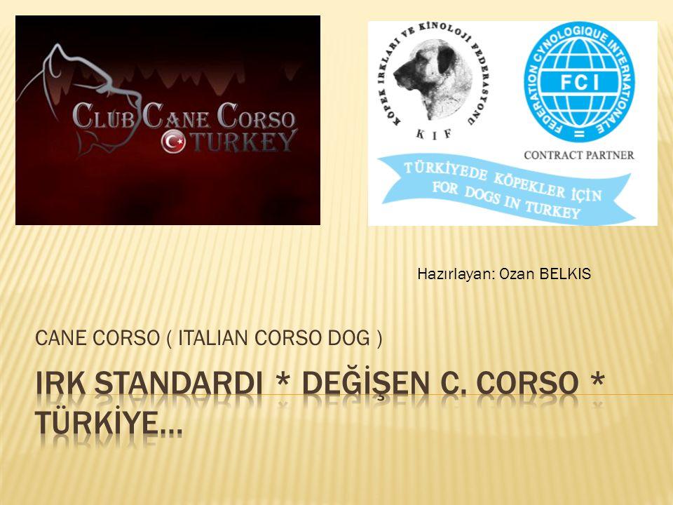 CANE CORSO ( ITALIAN CORSO DOG ) Hazırlayan: Ozan BELKIS