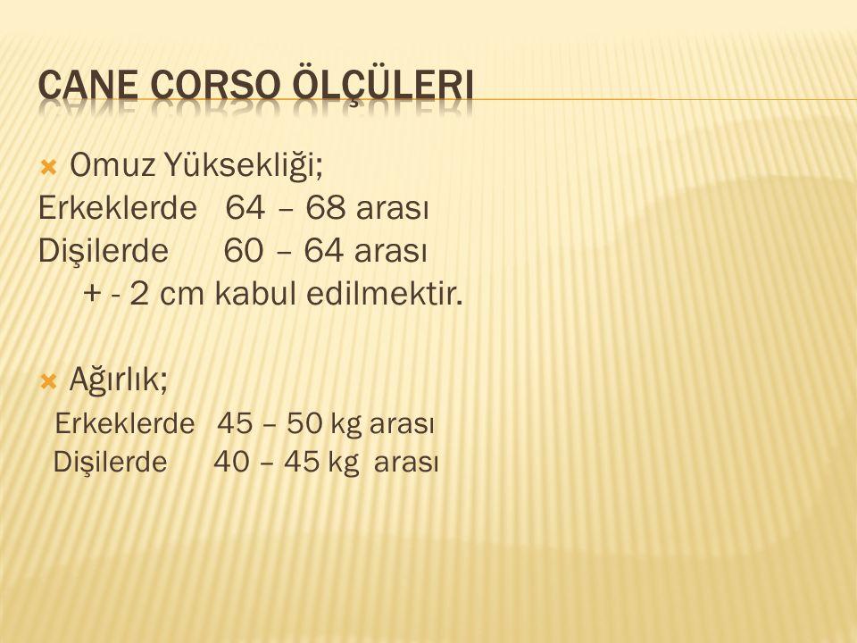  Omuz Yüksekliği; Erkeklerde 64 – 68 arası Dişilerde 60 – 64 arası + - 2 cm kabul edilmektir.