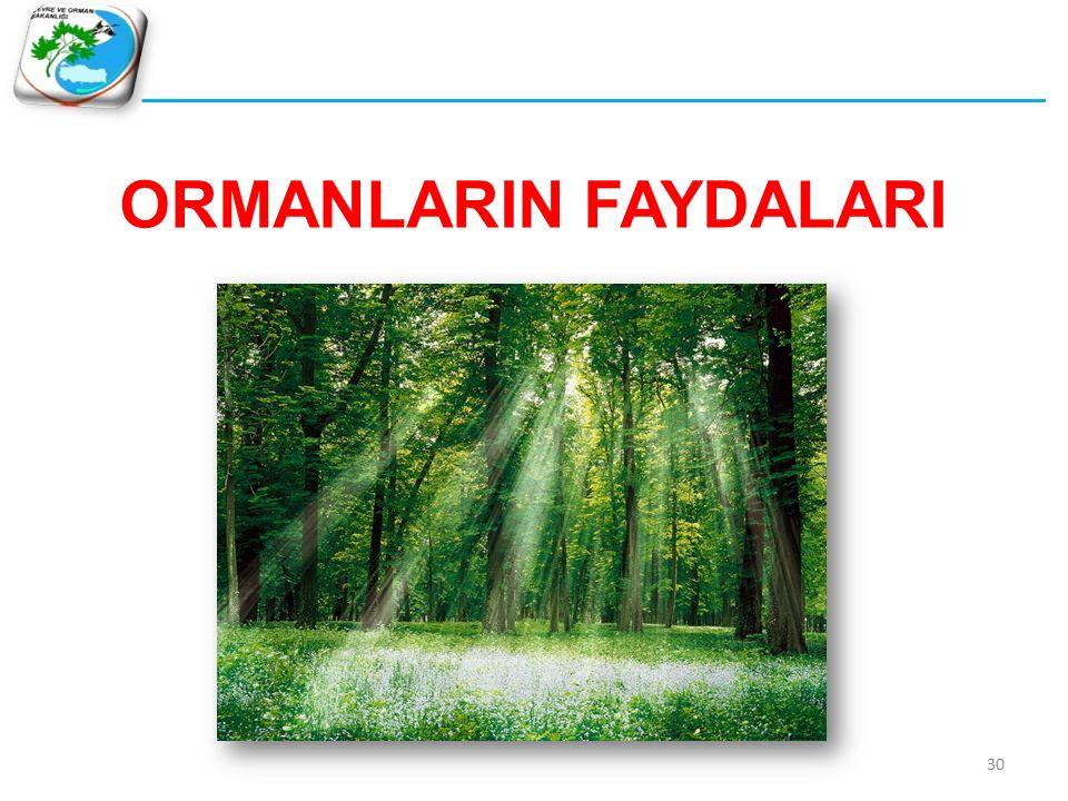 Hava kirliliğinin yaklaşık % 20'si ormanlar tarafından tutulmaktadır… ORMANLARIN FAYDALARI