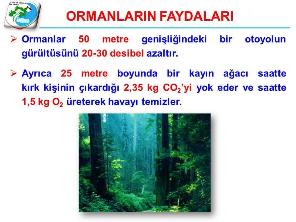  Ormanlar 50 metre genişliğindeki bir otoyolun gürültüsünü 20-30 desibel azaltır.  Ayrıca 25 metre boyunda bir kayın ağacı saatte kırk kişinin çıkar