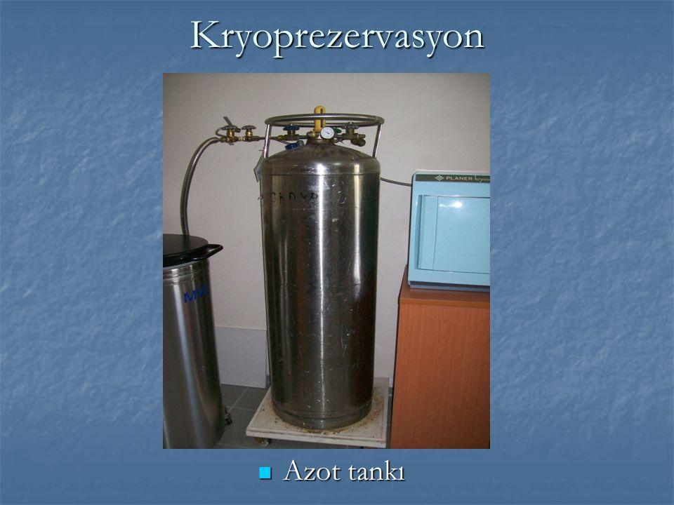 Kryoprezervasyon Azot tankı Azot tankı