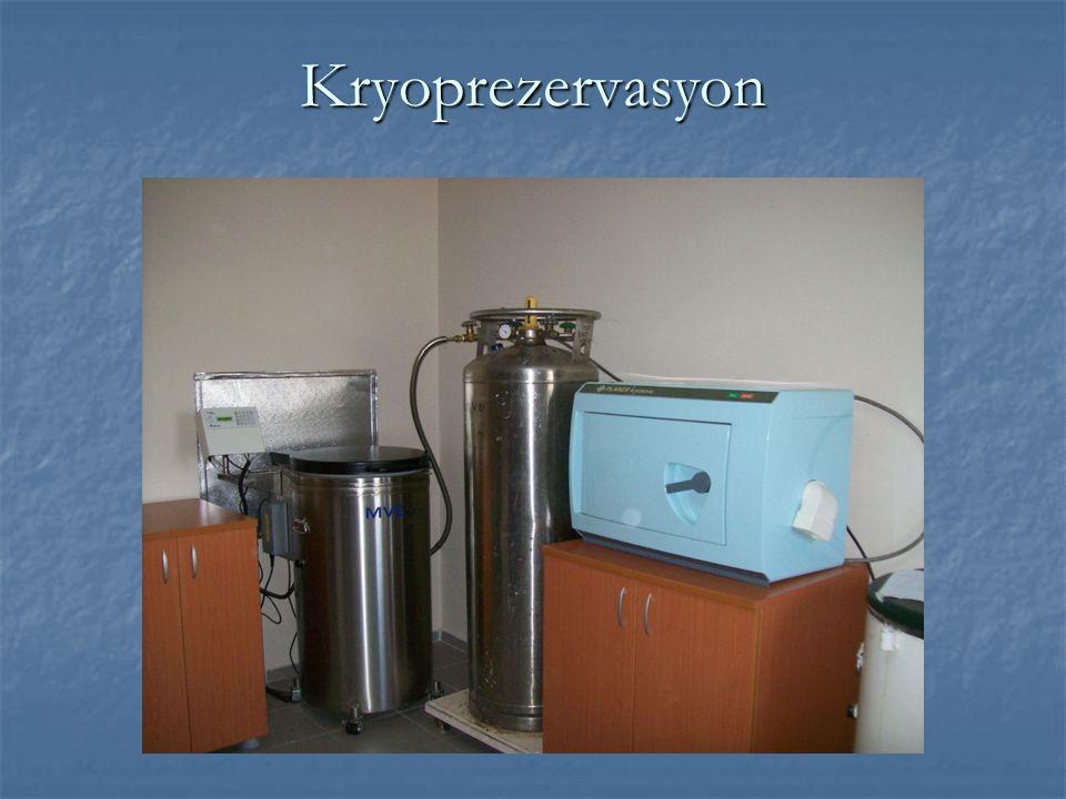 Kryoprezervasyon