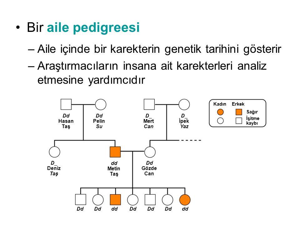 Bir aile pedigreesi –Aile içinde bir karekterin genetik tarihini gösterir –Araştırmacıların insana ait karekterleri analiz etmesine yardımcıdır Dd Has