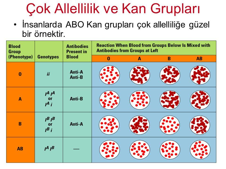 İnsanlarda ABO Kan grupları çok allelliliğe güzel bir örnektir. Çok Allellilik ve Kan Grupları