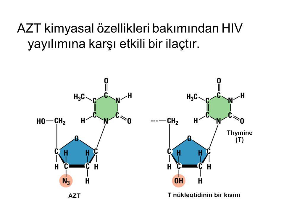 AZT kimyasal özellikleri bakımından HIV yayılımına karşı etkili bir ilaçtır. Thymine (T) AZT T nükleotidinin bir kısmı