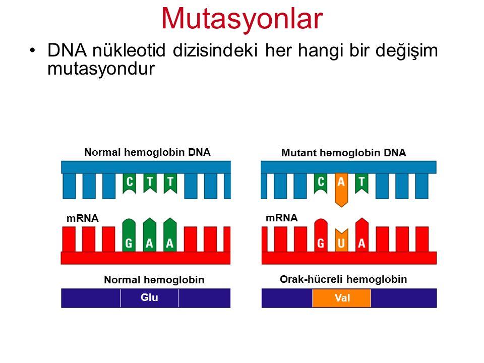 DNA nükleotid dizisindeki her hangi bir değişim mutasyondur Mutasyonlar Normal hemoglobin Orak-hücreli hemoglobin Glu Val Normal hemoglobin DNA Mutant