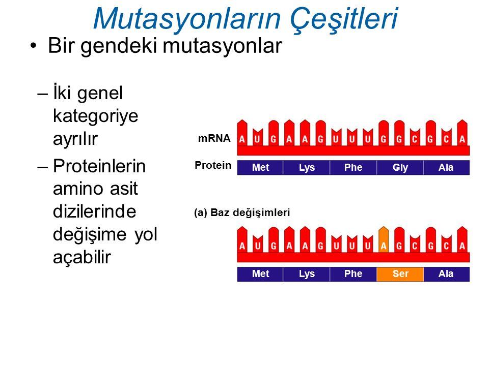 Bir gendeki mutasyonlar Mutasyonların Çeşitleri –İki genel kategoriye ayrılır –Proteinlerin amino asit dizilerinde değişime yol açabilir mRNA Protein