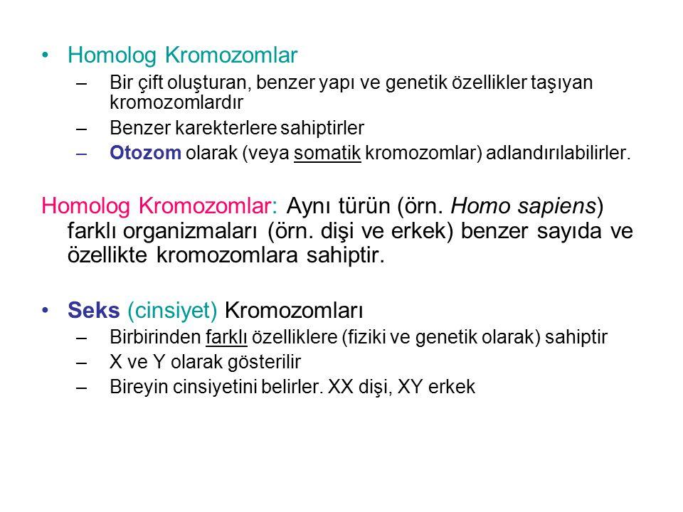 Homolog Kromozomlar –Bir çift oluşturan, benzer yapı ve genetik özellikler taşıyan kromozomlardır –Benzer karekterlere sahiptirler –Otozom olarak (vey