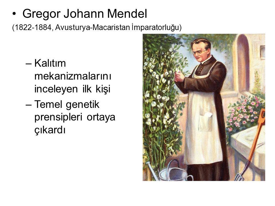 Gregor Johann Mendel (1822-1884, Avusturya-Macaristan İmparatorluğu) –Kalıtım mekanizmalarını inceleyen ilk kişi –Temel genetik prensipleri ortaya çık
