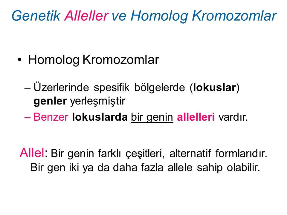 Homolog Kromozomlar Genetik Alleller ve Homolog Kromozomlar –Üzerlerinde spesifik bölgelerde (lokuslar) genler yerleşmiştir –Benzer lokuslarda bir gen