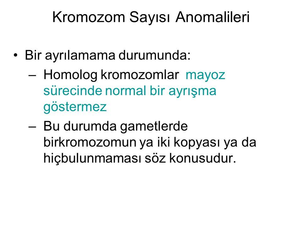 Kromozom Sayısı Anomalileri Bir ayrılamama durumunda: –Homolog kromozomlar mayoz sürecinde normal bir ayrışma göstermez –Bu durumda gametlerde birkrom