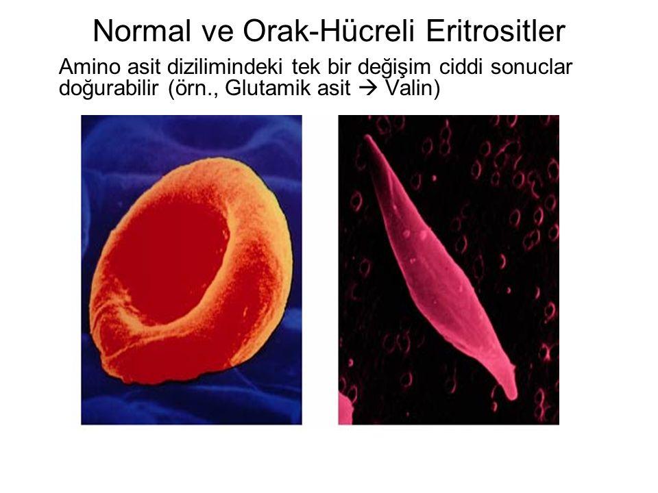 Seks kromozomları bazı karekterlerin kalıtımına etki eder.