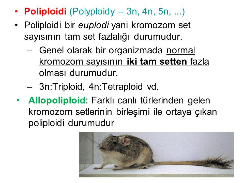 Poliploidi (Polyploidy – 3n, 4n, 5n,...) Poliploidi bir euplodi yani kromozom set sayısının tam set fazlalığı durumudur. –Genel olarak bir organizmada