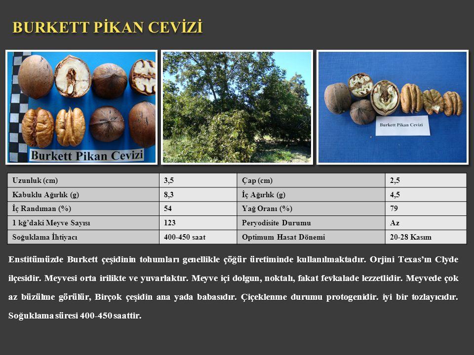 Enstitümüzde Burkett çeşidinin tohumları genellikle çöğür üretiminde kullanılmaktadır. Orjini Texas'ın Clyde ilçesidir. Meyvesi orta irilikte ve yuvar