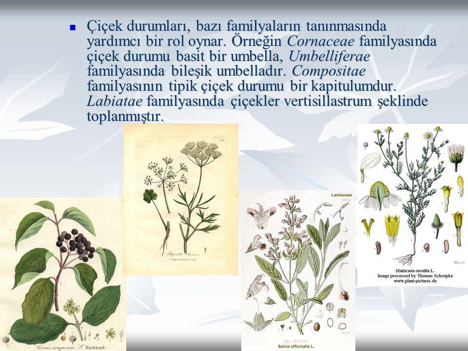 Çiçek durumları, bazı familyaların tanınmasında yardımcı bir rol oynar.