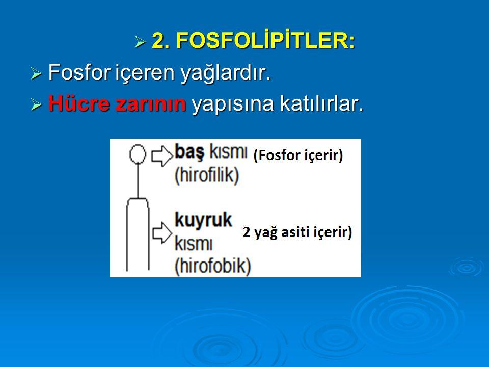  2. FOSFOLİPİTLER:  Fosfor içeren yağlardır.  Hücre zarının yapısına katılırlar.