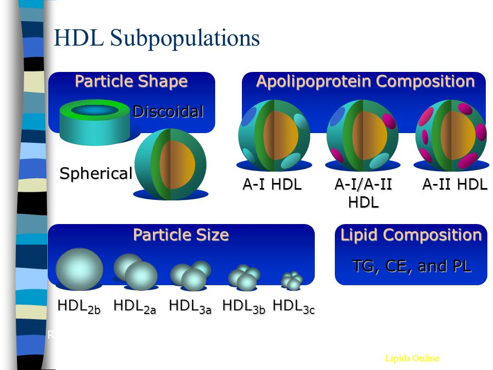 HDL Subpopulations Rye KA et al. Atherosclerosis 1999;145:227-238. Apolipoprotein Composition A-I HDL A-I/A-II HDL A-II HDL Particle Shape Discoidal S