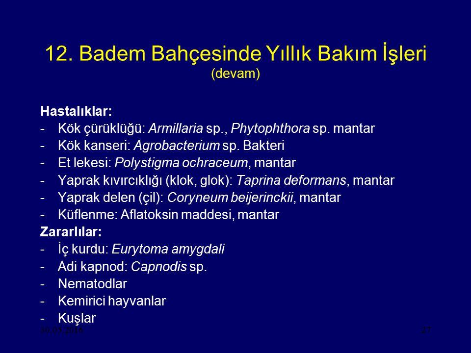 30.05.201627 12. Badem Bahçesinde Yıllık Bakım İşleri (devam) Hastalıklar: -Kök çürüklüğü: Armillaria sp., Phytophthora sp. mantar -Kök kanseri: Agrob
