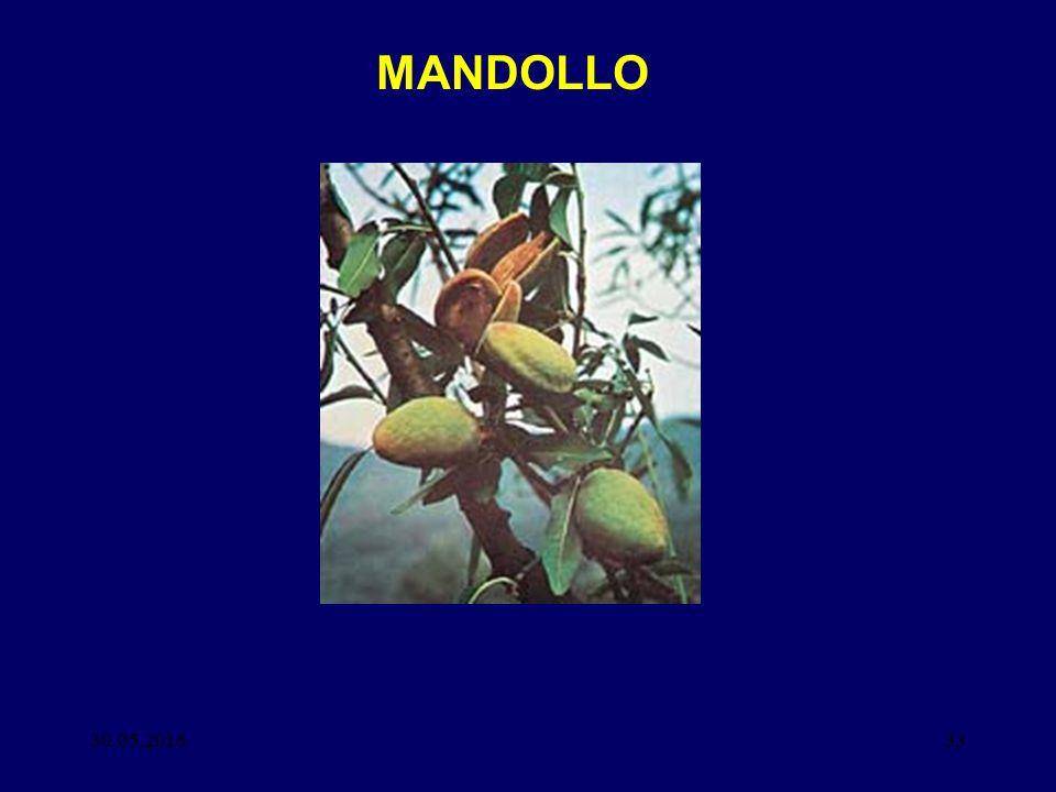 30.05.201633 MANDOLLO
