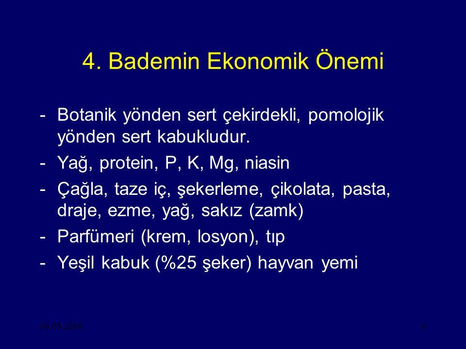30.05.20166 4. Bademin Ekonomik Önemi -Botanik yönden sert çekirdekli, pomolojik yönden sert kabukludur. -Yağ, protein, P, K, Mg, niasin -Çağla, taze