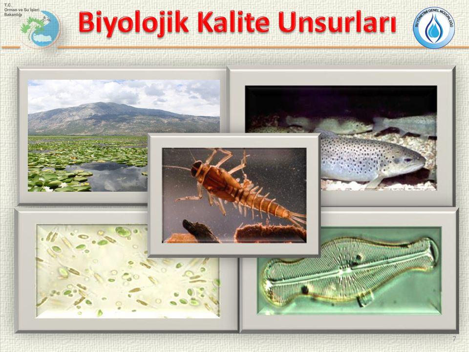 Bentik makroomurgasızlar nehirler için SÇD'ye göre izlenmesi gereken en uygun biyolojik kalite unsuru olarak kabul edilmektedir.