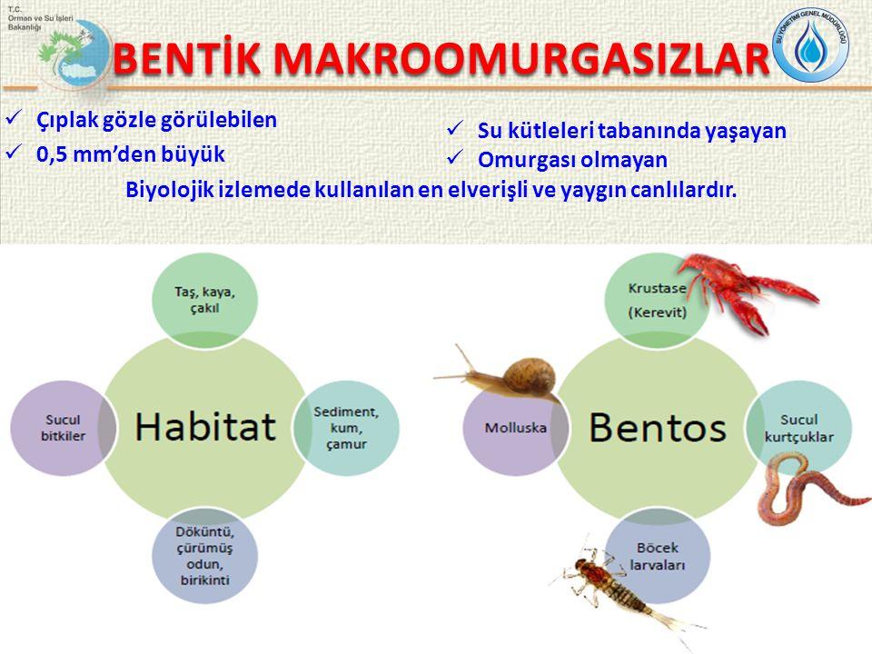 30/8 TS EN ISO 10870: TATLI SULARDA BENTİK MAKROOMURGASIZ ÖRNEKLEMESİ İÇİN YÖNTEM SEÇİMİNE DAİR KILAVUZ Direç / Tırmık Numune alınan habitat Direç Yorumu Bitkiler Yoğun bitki topluluklarında kullanımı sınırlıdır.