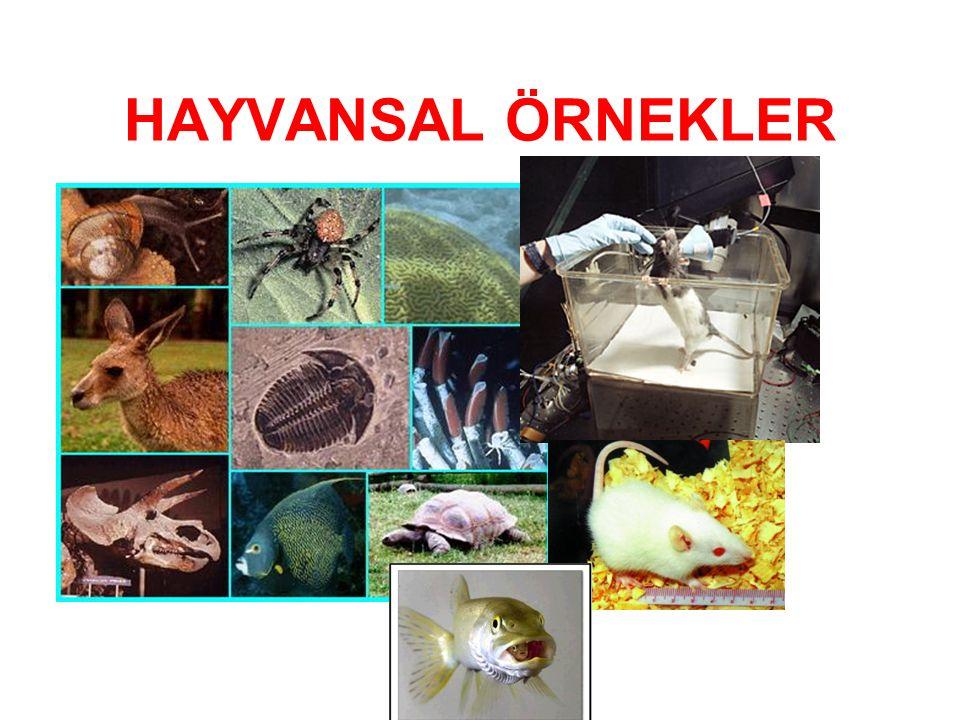 HAYVANSAL ÖRNEKLER