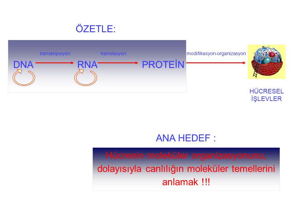 ÖZETLE: transkripsiyon translasyon modifikasyon-organizasyon DNA RNA PROTEİN HÜCRESEL İŞLEVLER ANA HEDEF : Hücrenin moleküler organizasyonunu, dolayıs
