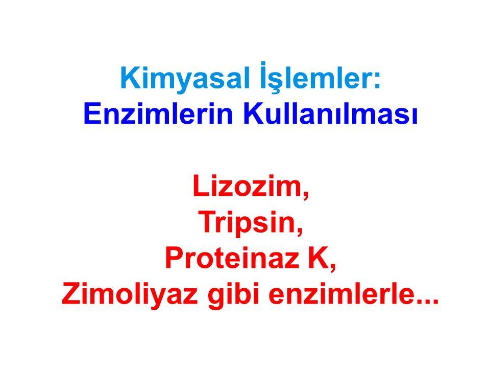 Kimyasal İşlemler: Enzimlerin Kullanılması Lizozim, Tripsin, Proteinaz K, Zimoliyaz gibi enzimlerle...