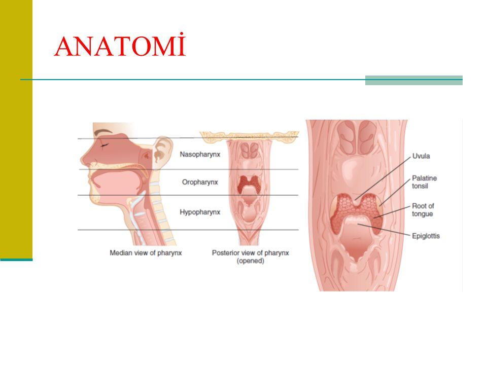 SİNÜZİT ve RİNOSİNÜZİT KOMPLİKASYONLARI - Menenjit - Kavernöz sinüs trombozu - İntrakranial abse - Orbital selülit - Osteomiyelit