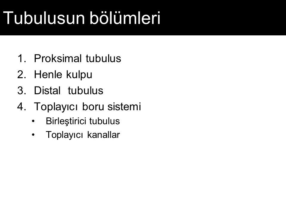 Tubulusun bölümleri 1.Proksimal tubulus 2.Henle kulpu 3.Distal tubulus 4.Toplayıcı boru sistemi Birleştirici tubulus Toplayıcı kanallar