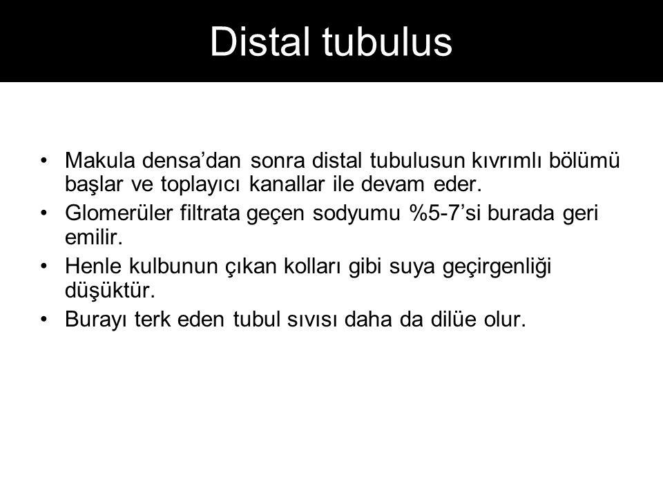 Distal tubulus Makula densa'dan sonra distal tubulusun kıvrımlı bölümü başlar ve toplayıcı kanallar ile devam eder. Glomerüler filtrata geçen sodyumu