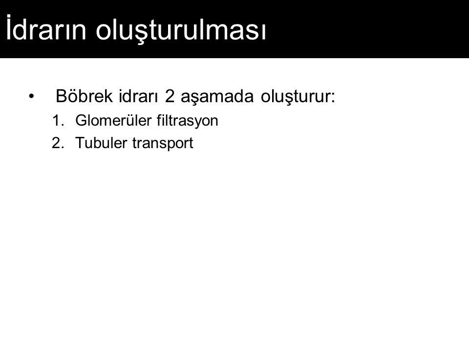 İdrarın oluşturulması Böbrek idrarı 2 aşamada oluşturur: 1.Glomerüler filtrasyon 2.Tubuler transport