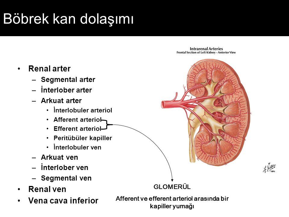 Böbrek kan dolaşımı Renal arter –Segmental arter –İnterlober arter –Arkuat arter İnterlobuler arteriol Afferent arteriol Efferent arteriol Peritübüler
