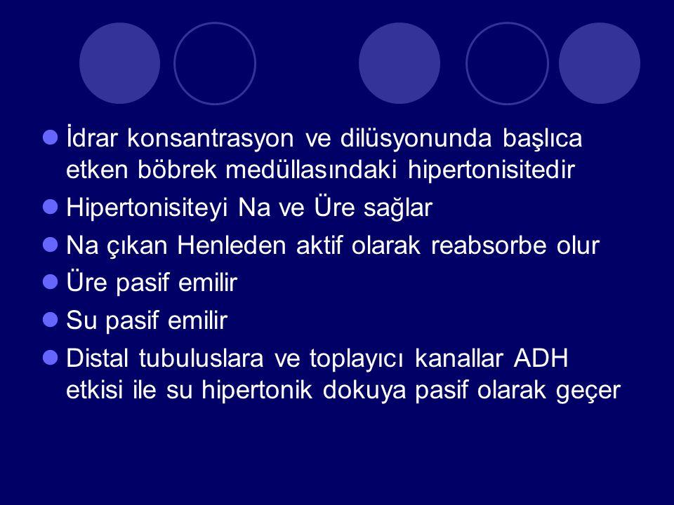 İdrar konsantrasyon ve dilüsyonunda başlıca etken böbrek medüllasındaki hipertonisitedir Hipertonisiteyi Na ve Üre sağlar Na çıkan Henleden aktif olarak reabsorbe olur Üre pasif emilir Su pasif emilir Distal tubuluslara ve toplayıcı kanallar ADH etkisi ile su hipertonik dokuya pasif olarak geçer