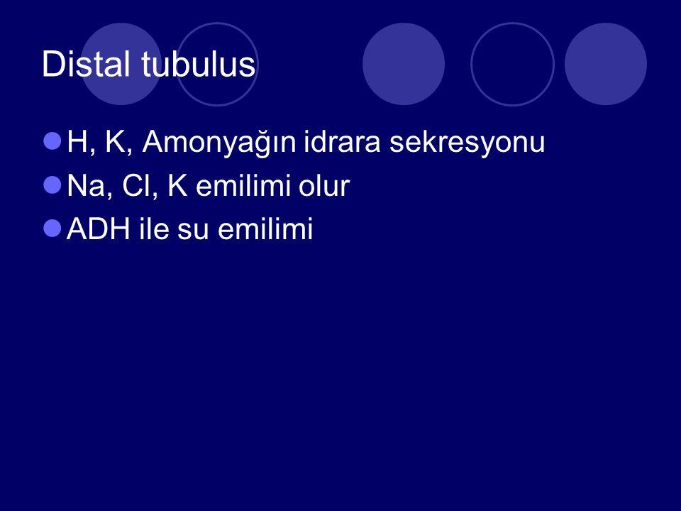 Distal tubulus H, K, Amonyağın idrara sekresyonu Na, Cl, K emilimi olur ADH ile su emilimi