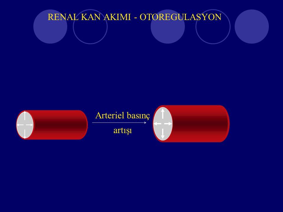 RENAL KAN AKIMI - OTOREGULASYON Arteriel basınç artışı Flow increases