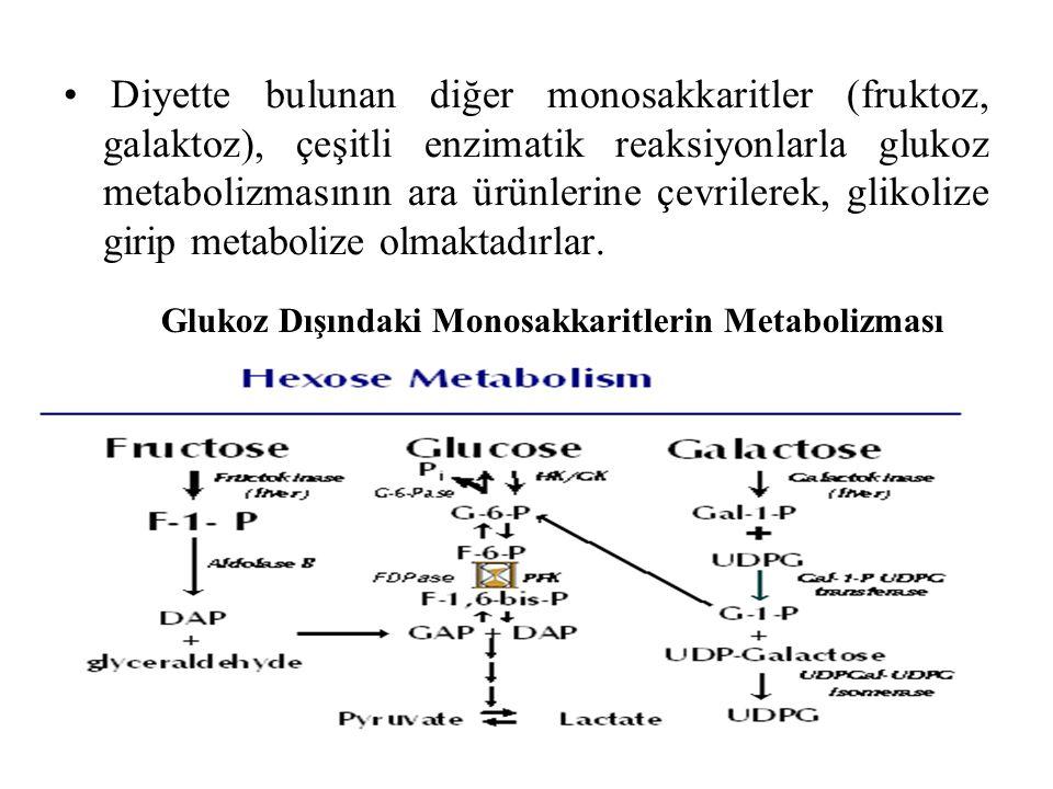 Diyette bulunan diğer monosakkaritler (fruktoz, galaktoz), çeşitli enzimatik reaksiyonlarla glukoz metabolizmasının ara ürünlerine çevrilerek, glikolize girip metabolize olmaktadırlar.