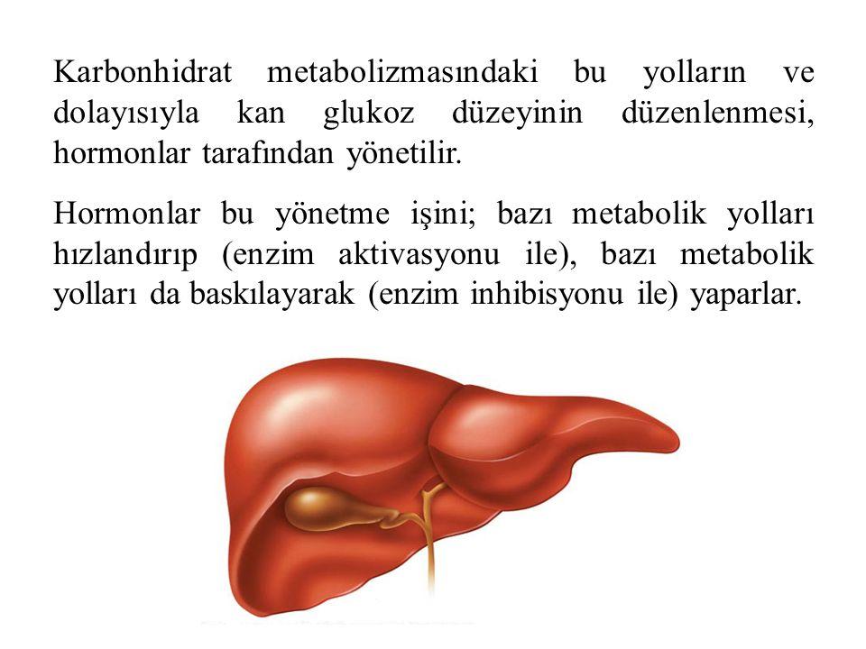 Karbonhidrat metabolizmasındaki bu yolların ve dolayısıyla kan glukoz düzeyinin düzenlenmesi, hormonlar tarafından yönetilir.