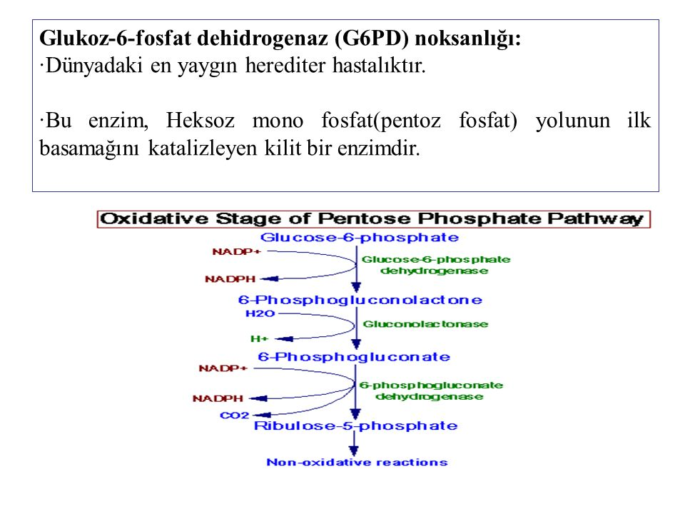 Glukoz-6-fosfat dehidrogenaz (G6PD) noksanlığı: ∙Dünyadaki en yaygın herediter hastalıktır.
