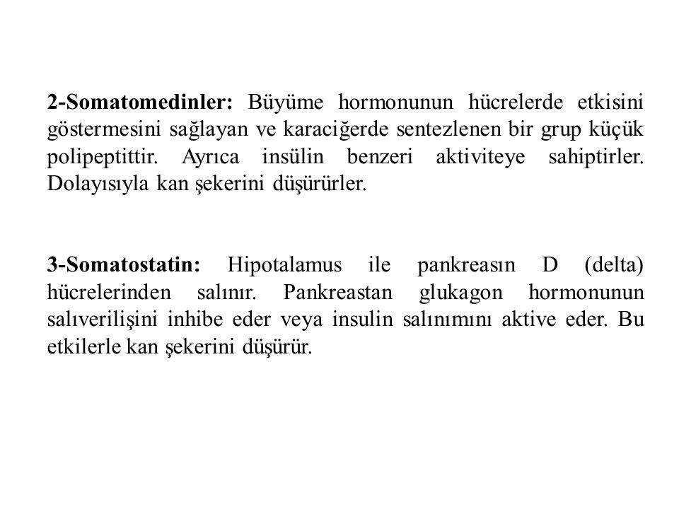 2-Somatomedinler: Büyüme hormonunun hücrelerde etkisini göstermesini sağlayan ve karaciğerde sentezlenen bir grup küçük polipeptittir.