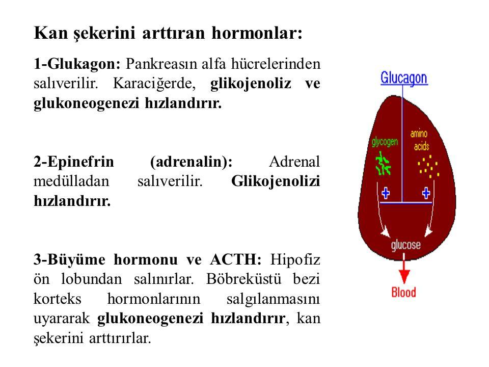 Kan şekerini arttıran hormonlar: 1-Glukagon: Pankreasın alfa hücrelerinden salıverilir.