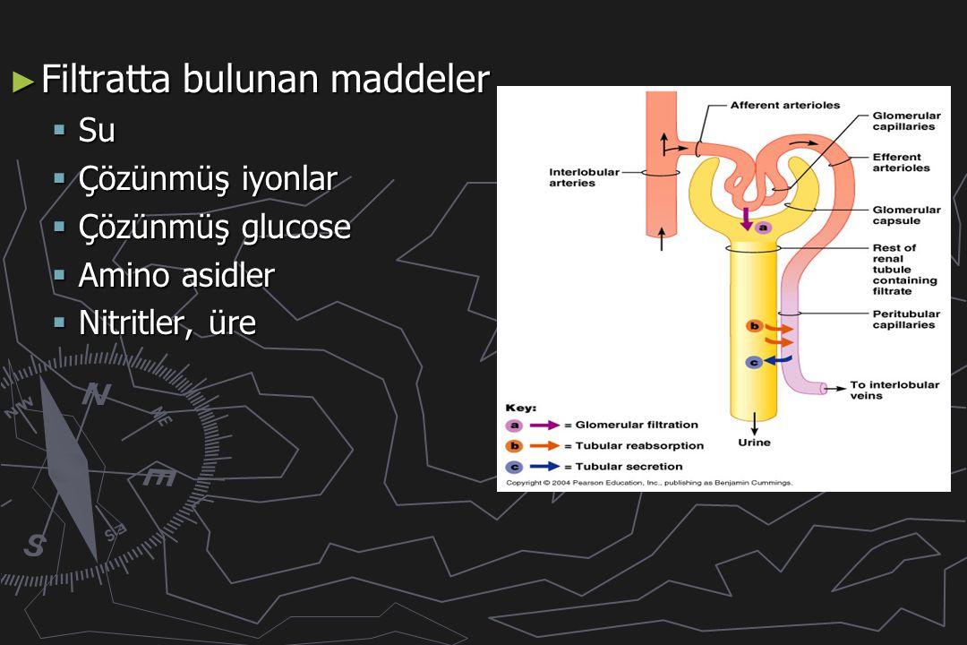 ► Filtratta bulunan maddeler  Su  Çözünmüş iyonlar  Çözünmüş glucose  Amino asidler  Nitritler, üre