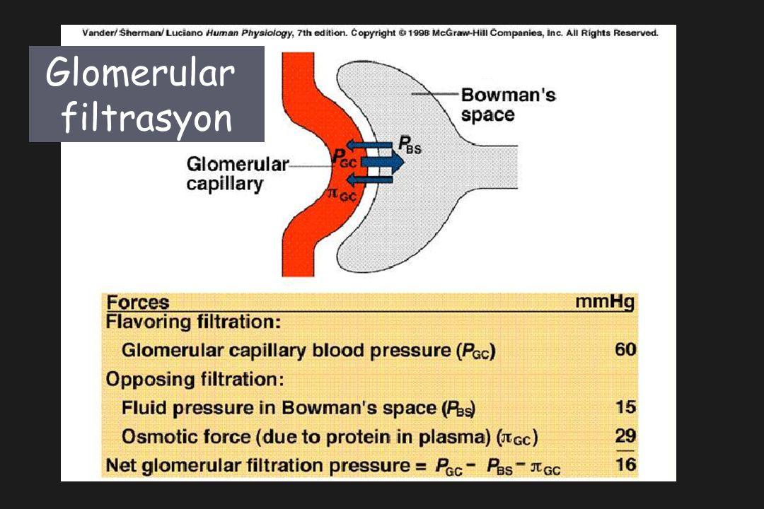 Glomerular filtrasyon