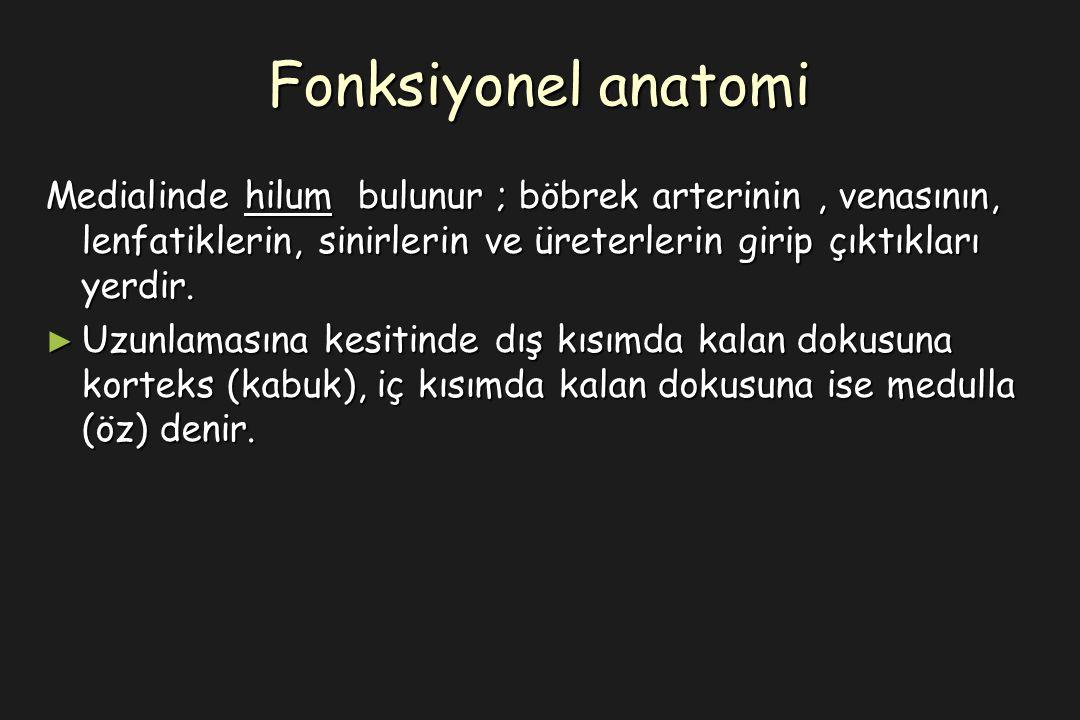 Fonksiyonel anatomi Medialinde hilum bulunur ; böbrek arterinin, venasının, lenfatiklerin, sinirlerin ve üreterlerin girip çıktıkları yerdir.