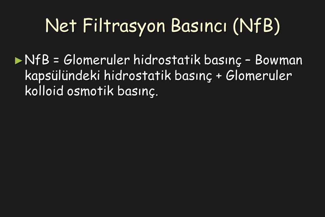 Net Filtrasyon Basıncı (NfB) ► NfB = Glomeruler hidrostatik basınç – Bowman kapsülündeki hidrostatik basınç + Glomeruler kolloid osmotik basınç.