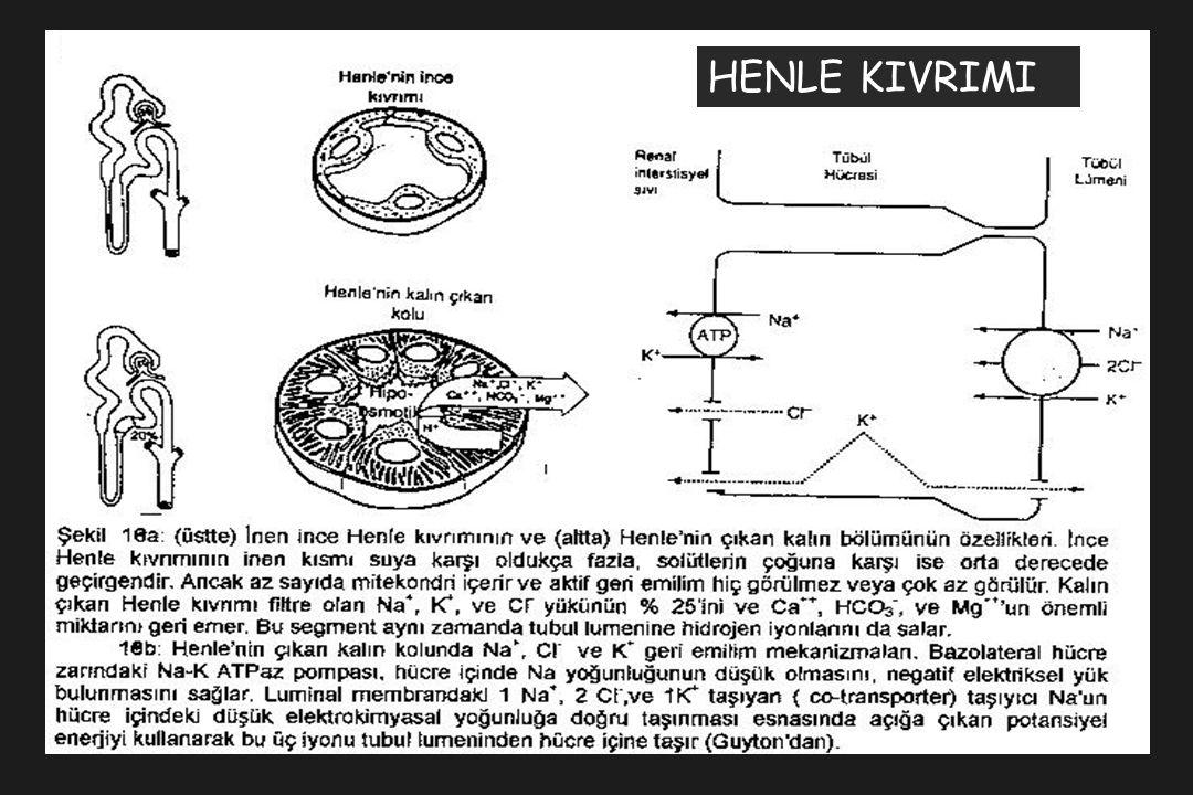 HENLE KIVRIMI