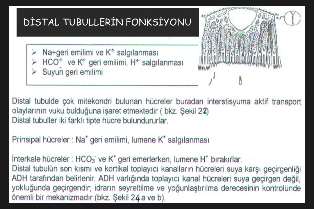 DİSTAL TUBULLERİN FONKSİYONU